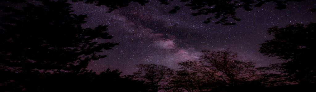 Photo of a starry sky at night surrounded by trees by Nathan Anderson